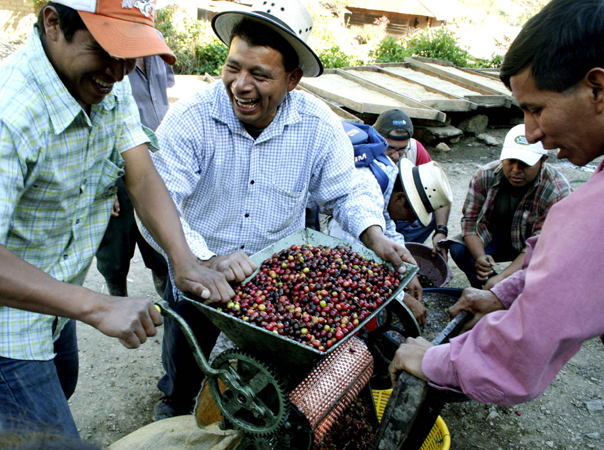 Coffee processing in Peru.